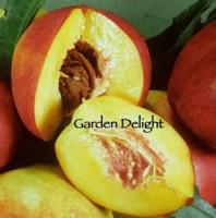 Garden Delight Nectarine