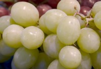 Grape - Kay Gray