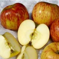 Apple Tree - Gravenstein
