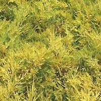 Juniper - Saybrook Gold®