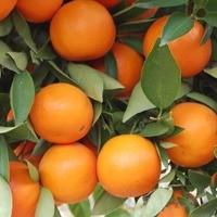 Mandarin - Page