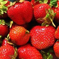 Strawberry - Dunlap