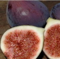 Fig - Texas Blue Giant