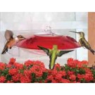 Droll Yankees Window Hummer Hummingbird Feeder - Red/Clear