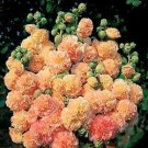 Hollyhock - Peaches 'n Dreams