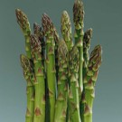 Asparagus - Jersey Giant