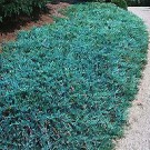 Blue Rug Juniper