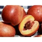 Fantasia Peach