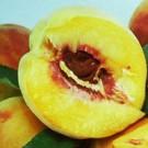 Garden Gold Peach