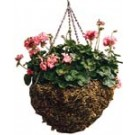 Hanging Moss Basket - 18 in.