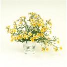 Nemesia - Sunsatia™ Lemon