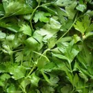 Parsley - Flat Leaf - Organic