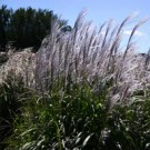 Grass - Flame