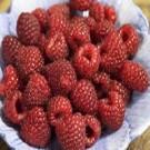 Raspberry - Heritage