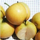 Shinseiki Pear