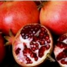 Pomegranate - Wonderful