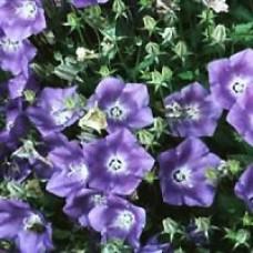 Bellflower - Blue Clips
