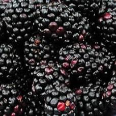 Blackberry - Darrow