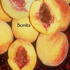 Bonita Peach Tree