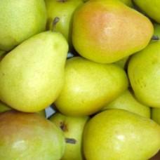 Pear Tree - D Anjou