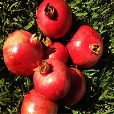 Pomegranate - Wonderful