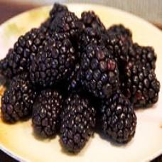 Raspberry - Bristol Black