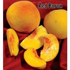Red Barron Peach Tree