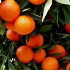 Orange - Sanguinelli Blood