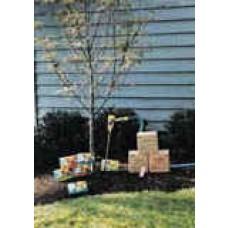 Root Feeder Tree Cartridges