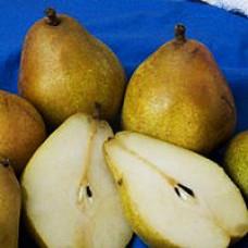 Pear Tree - Warren