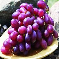 Grape - Mars
