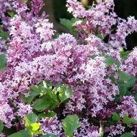 Zones 4 & 5 June Gardening Tips